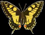 butterfly-1204621_960_720